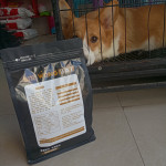 Grain Free High Protein Dry Salmon-flavored  Dog Food