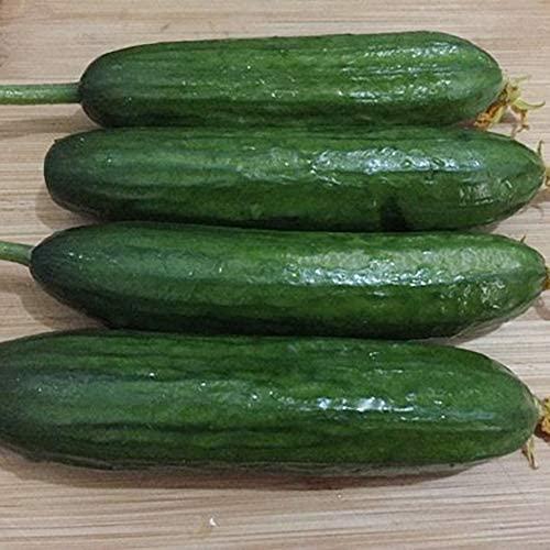 Black Zucchini Seeds 25 Capsules/Pack,Vegetable Seeds Survival Garden, Emergency, Survival Kit Non-GMO, Organic, Heir-Loom, Plant Fruit Seed for Indoor, Garden, Grass, Balcony, Farm, Home : Garden & Outdoor