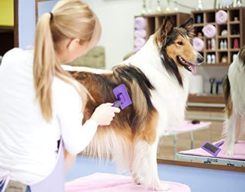 Hertzko Pet Brush Dog Cat Grooming Deshedding Comb for Bathing, Shampooing and Massaging Dogs and Cats with Short or Long Hair - Soft Rubber Bristles Removes Loose & Shed Fur from Your Pet's Coat : Pet Supplies