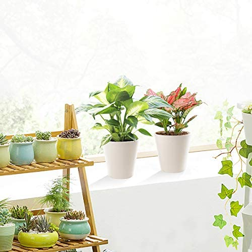 Plastic Planters, 6 inch Plant Pots for African Violets, Aloe Vera, Peace Lilly, Round Hanging Planters with Drainage Hole and Stoppers, Home Office Garden Decoration, Creamy White, Set of 5: Garden & Outdoor