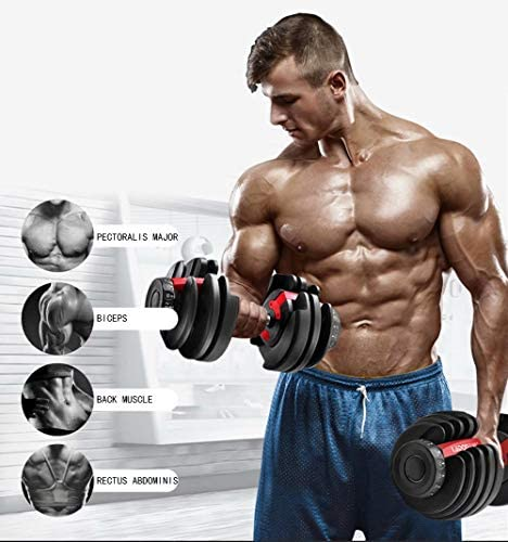 AlfaBridal Adjustable Dumbbells 52.5 lbs Weights for Gym Home Fitness Weight Gym Workout Exercise Training for Women and Men Red (Single) : Sports & Outdoors