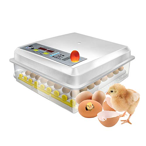 64 Eggs Egg Incubator Fully Automatic Incubator Digital Poultry Hatcher Egg Turning Temp Control: : Industrial & Scientific